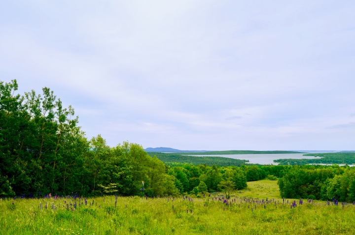 Wandering Maine: Blue Hill Mountain